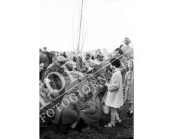 1954 7815 isolotto festa degli alberi