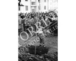 1954 7816 isolotto festa degli alberi