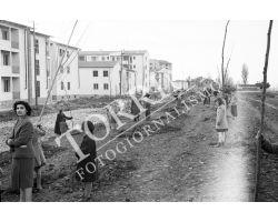 1954 7817 isolotto festa degli alberi