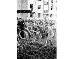 1954 7818 isolotto festa degli alberi