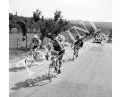1955 05547 giro della Toscana dilettanti ciclismo